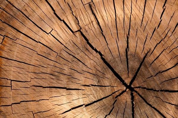 Difetti del legno per finestre