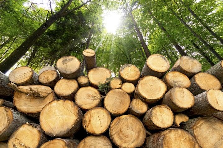 la qualità del legno